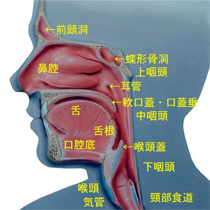 咽頭喉頭異常感症、咽喉頭異常感症