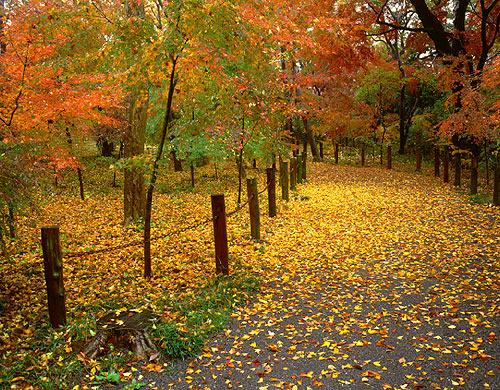 荒芜树林风景高清摄影